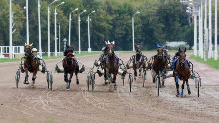Alt du har brug for at vide, for at spille på hestevæddeløb